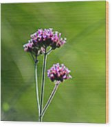 Portrait Of Purple Verbena Wood Print