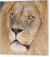 Portrait Of The Lion Wood Print