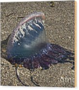 Portuguese Man-o War Beached Wood Print