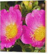 Portulaca Flower Wood Print
