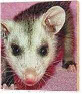 Poser Possum Wood Print