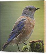 Posing Bluebird Wood Print
