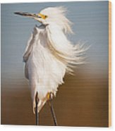 Posing Egret Wood Print by Tammy Smith