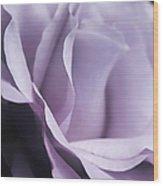 Posing Purple Rose Flower Wood Print