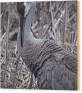 Posing Sandhill Crane Wood Print