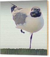 Posing Seagull Wood Print
