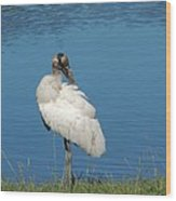 Posing Wood Stork Wood Print