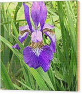 Posterized Japanese Iris Wood Print