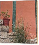 Pot Plants Wood Print