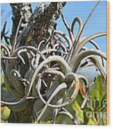 Potbelly Airplant Wood Print