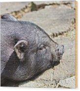 Potbelly Pig Wood Print