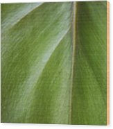 Pothos Detail Wood Print