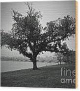 Potomac Tree Wood Print