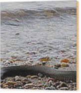 Potomac Water Snake Wood Print