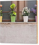 Potted Flowers 01 Wood Print by Rick Piper Photography