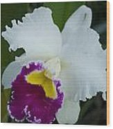 Potted Orchid Wood Print