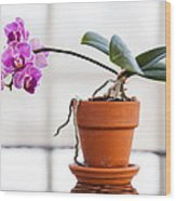 Potted Pink Orchid Wood Print