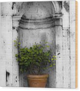 Potted Plant At Villa D'este Near Rome Italy Wood Print