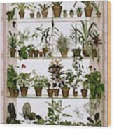 Potted Plants On Shelves Wood Print