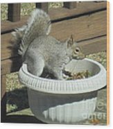 Potted Squirrel Wood Print