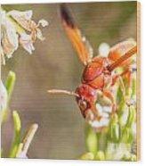 Potter Wasp Female Wood Print