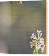 Potter Wasp In Flight Wood Print