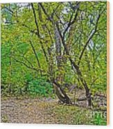 Poudre Trees-2 Wood Print by Baywest Imaging
