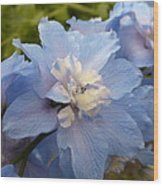 Powder Blue Beauty Wood Print