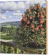 Powis Castle Terrace Wood Print