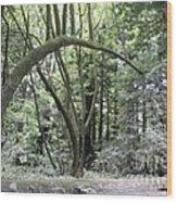 pr 136 - Bowed Tree Wood Print