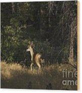 pr 140 -Deer in the Grass Wood Print