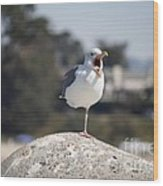 pr 175 - The Tired Seagull Wood Print