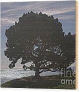 pr 216- Black Oak Wood Print