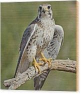 Praire Falcon On Dead Branch Wood Print