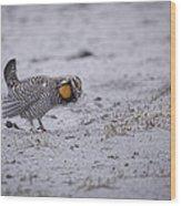 Prairie Chicken 2013-2 Wood Print