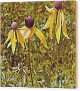 Prairie Coneflowers In Pipestone National Monument-minnesota  Wood Print