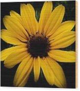 Prairie Coreopsis Wood Print