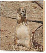 Prairie Dog - National Zoo - 01132 Wood Print