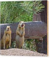 Prairie Dogs In Bryce Wood Print