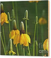 Prairie Flowers Wood Print
