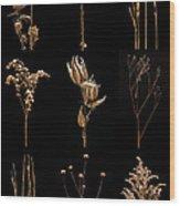 Prairie Plant Still Life Wood Print