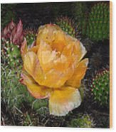 Prairie Rose II Wood Print