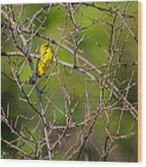 Prairie Warbler Wood Print