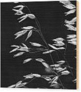 Prarie Grass Wood Print