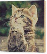 Praying Cat Wood Print