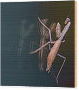 Praying Mantis 1 Wood Print