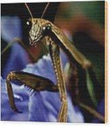 Praying Mantis  Closeup Portrait 4 On Iris Flower Wood Print