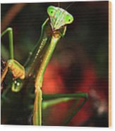 Praying Mantis Portrait Wood Print
