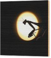 Praying Mantis Silhouette Wood Print