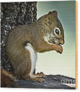Praying Squirrel Wood Print